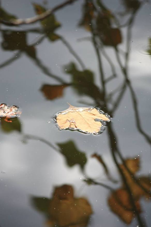 Leaf and reflection in pond at Penuel Rigdge, photograh by Tracy Wilson