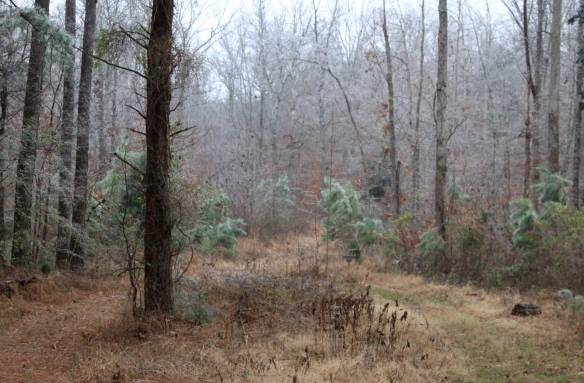 Misty Ice at Bethany Hills