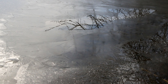 Frozen Water with Reflection