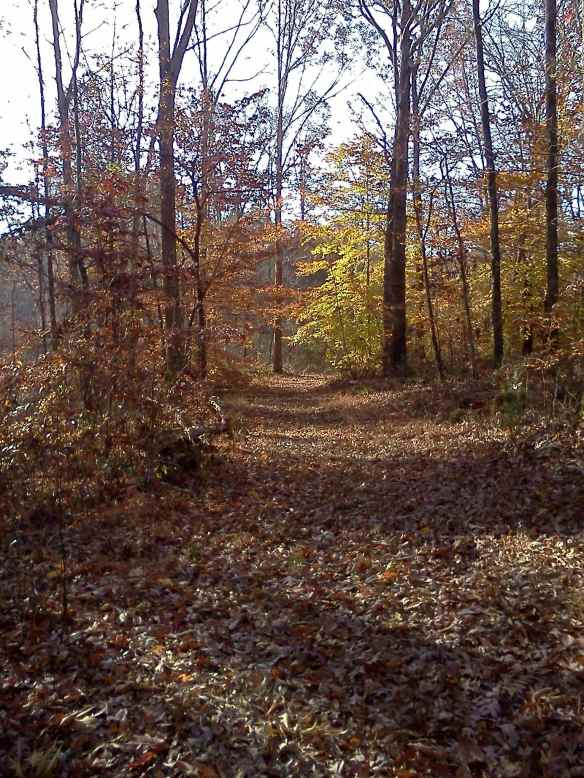 Still some leaves hanging on. The paths and trails around Bethany Hills Camp provided some good hiking opportunities. Photo by Frankie Fachilla