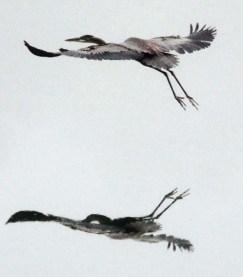 Taking Flightcrop